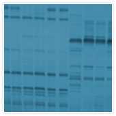 Protein Characterization and Testing